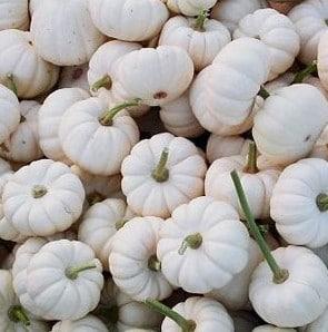 Abóbora Baby Boo Branca: 7 sementes