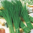 Cebolinha Todo Ano (Ciboulette): 20 Sementes