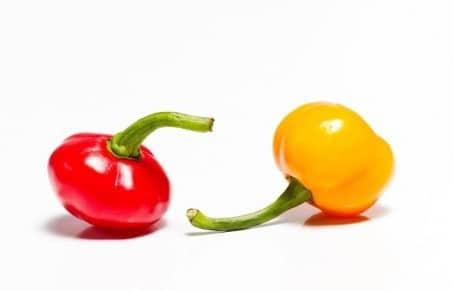 Comprar Sementes de Pimenta Bode Vermelha