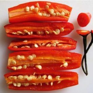Comprar Sementes de Pimenta Dedo de Moça
