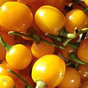 Pimenta Arari Bode Amarela