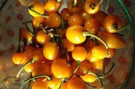 Pimenta Arari Bode Amarela: 40 Sementes