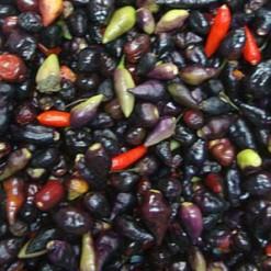 Pimenta Baiana: 20 Sementes