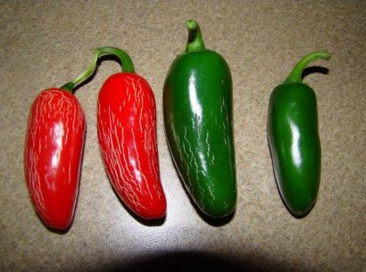 Pimenta Jalapenho (Jalapeño): 20 Sementes