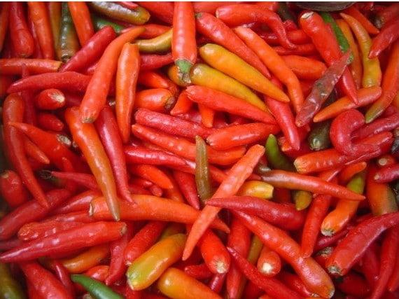 Pimenta Malagueta: 60 Sementes
