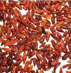 Plantar Pimenta Chili Mexicana