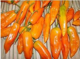 Sementes de Pimenta Aji Amarela