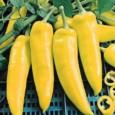 Sementes de Pimenta Amarela Comprida