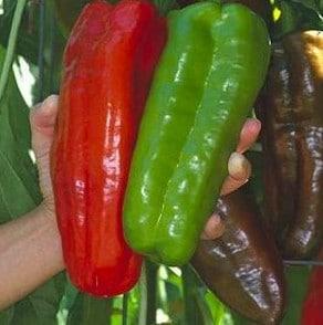 Sementes de Pimenta Big Jim Numex