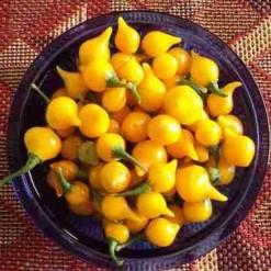 Comprar Sementes de Pimenta Biquinho Amarela