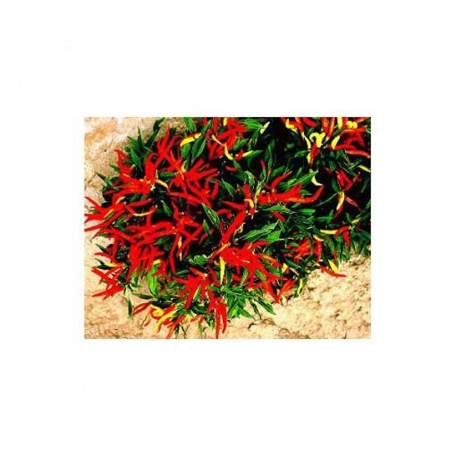 Sementes de Pimenta Etna Ornamental