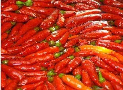 Sementes de Pimenta Malaguetinha