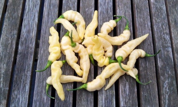 Sementes de Pimenta Murupi