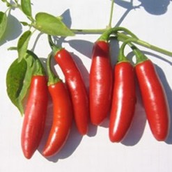 Sementes de Pimenta Serrano