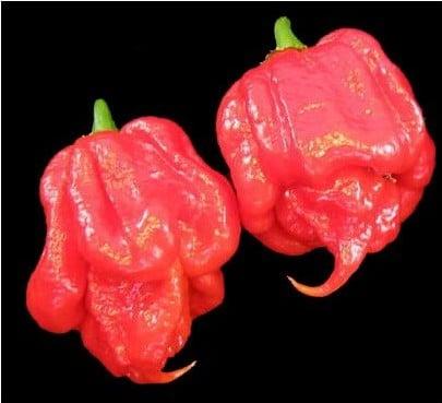 Comprar Sementes de Trinidad Scorpion (Pimenta Nuclear)