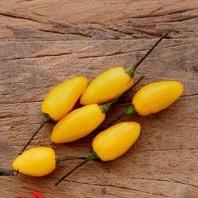 Comprar Sementes Online de Pimenta Fidalga