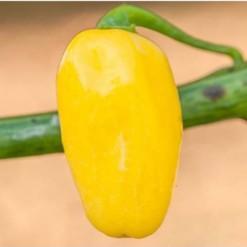 Comprar Sementes Online Pimenta Cumari-do-Pará