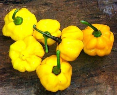 Sementes Pimenta Jamaican Yellow (Scotch Bonnet)