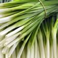 Tempero Cebolinha Todo Ano: 20 sementes