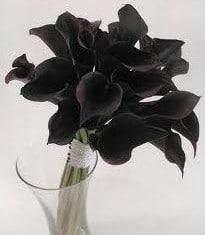 Copo de Leite Negro: 1 Bulbo