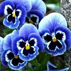amor-azul-branco-dinamite