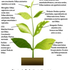Casa Verde Folhas Fertilizante 120ml