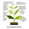 Fertilizante Para Flores NPK 04-14-08 120ml