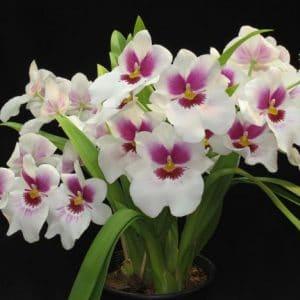 Comprar Fertilizante para Orquídea 100g