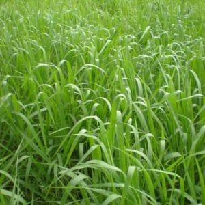 Glifosato Herbicida 20ml