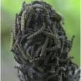 Comprar Inseticida Biológico para Lagartas Dimypel
