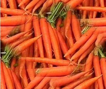 Cenoura Comprida: 50 Sementes