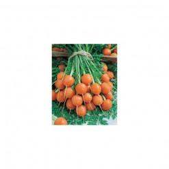Cenoura Redonda: 50 Sementes
