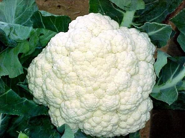 Couve-Flor: 50 Sementes