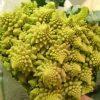 Couve-Flor Verde Romana: 50 Sementes