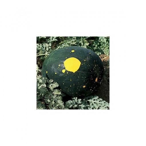 Melancia Red Moon & Stars: 7 Sementes