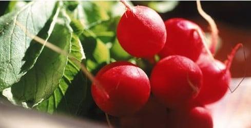 Rabanete Vermelho: 50 Sementes