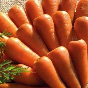 Comprar Sementes Cenoura Chantenay