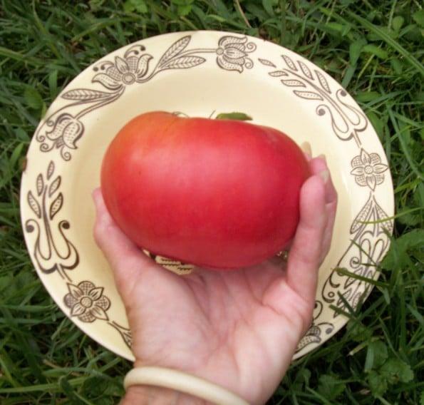 Tomate Siberiano: 20 Sementes