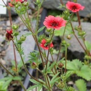 Cinco Folhas: 20 Sementes