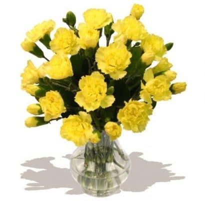 Cravo Amarelo: 15 Sementes