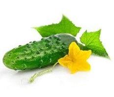 Pepino para Conserva: 20 Sementes