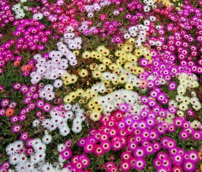 Tapete Mágico Sortido: 20 Sementes
