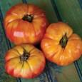 Tomate Belga Rosa Gigante: 20 Sementes