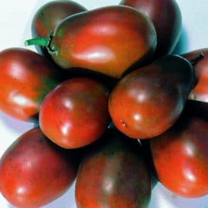 Tomate Big Rainbow: 20 Sementes