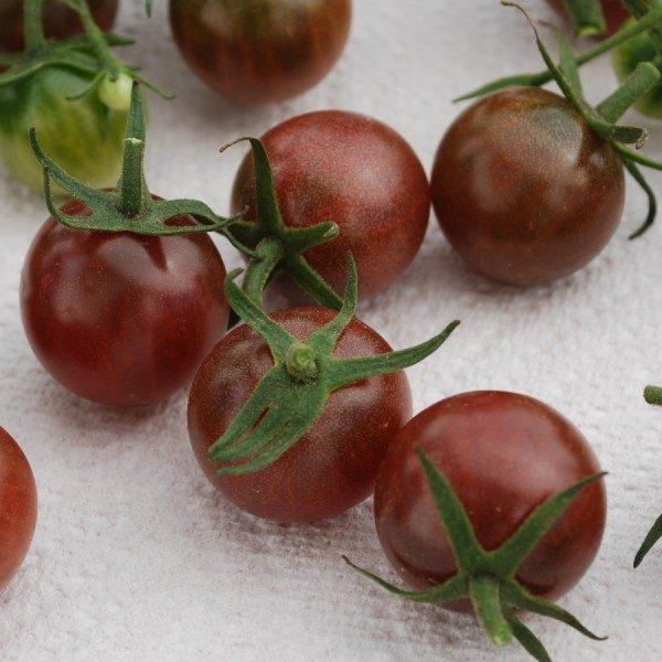 Tomate Black Cherry: 20 Sementes