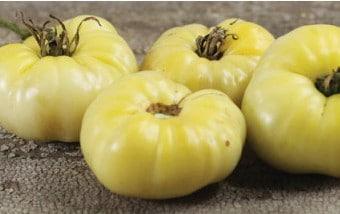 Tomate Great White Beefsteak: 20 Sementes