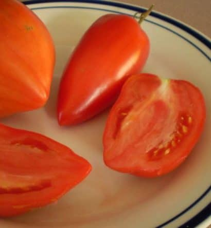 Tomate Linguisa Polonês: 20 Sementes