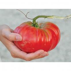 Tomate Ponderosa Red: 20 Sementes
