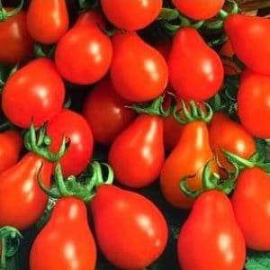 Tomate Red Pear: 20 Sementes