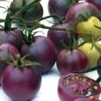 Tomate Roxo: 20 Sementes